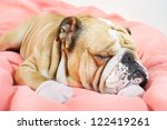 sad english bulldog dog resting ... | Shutterstock . vector #122419261