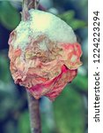 Close Up Of Rosebud Covered In...