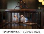 bird in cage | Shutterstock . vector #1224284521