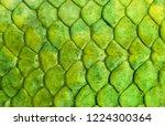 Skin reptile green crocodile...