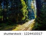 forest trail sunlight view....   Shutterstock . vector #1224410317