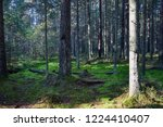 mossy forest trees background.... | Shutterstock . vector #1224410407