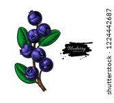blueberry drawing. isolated... | Shutterstock . vector #1224442687