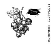 black currant drawing. isolated ... | Shutterstock . vector #1224442711