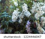 big flowers of white delphinium ... | Shutterstock . vector #1224446047