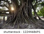 Large And Oldest Banyan Tree