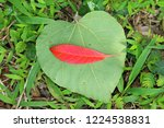 red leaf and green leaf | Shutterstock . vector #1224538831