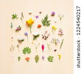 collection of various blooming... | Shutterstock . vector #1224540217
