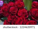 natural roses velvet dark red...   Shutterstock . vector #1224620971