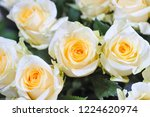 natural roses delicate yellow...   Shutterstock . vector #1224620974