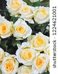natural roses delicate yellow...   Shutterstock . vector #1224621001