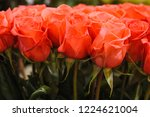 natural roses delicate red with ...   Shutterstock . vector #1224621004