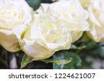 natural roses delicate white...   Shutterstock . vector #1224621007