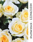 natural roses delicate yellow...   Shutterstock . vector #1224621034