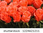 natural roses delicate red with ...   Shutterstock . vector #1224621211