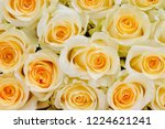 natural roses delicate yellow...   Shutterstock . vector #1224621241