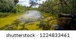 salt springs in ocala national... | Shutterstock . vector #1224833461