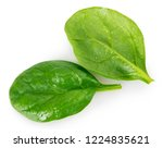 fresh spinach isolated on white ... | Shutterstock . vector #1224835621