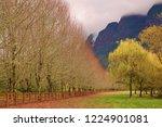 beauty in autumn even after...   Shutterstock . vector #1224901081