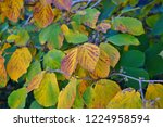 orange and golden foliage of...   Shutterstock . vector #1224958594