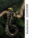 mangrove snake   Shutterstock . vector #122495989