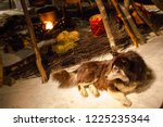 dog near fire of a lappish tent ... | Shutterstock . vector #1225235344