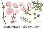 flowering twigs and nuts of... | Shutterstock .eps vector #1225242424