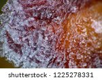 hoarfrost on the branches. ice... | Shutterstock . vector #1225278331