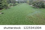 water hyacinth is a free... | Shutterstock . vector #1225341004