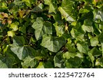 green vibrant background of... | Shutterstock . vector #1225472764