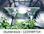 chilli plants growing via... | Shutterstock . vector #1225489714