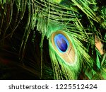 peacock plumage green and blue | Shutterstock . vector #1225512424