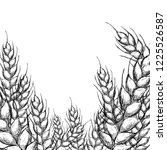 wheat crop drawing sketch | Shutterstock .eps vector #1225526587