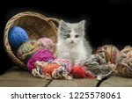 Stock photo cute kitten with ball of yarn on black background cat playing with a ball of yarn 1225578061