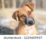 a mixed breed puppy listening... | Shutterstock . vector #1225605937