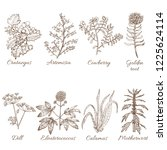 set of medicinal plants.... | Shutterstock .eps vector #1225624114