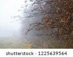 autumn forest mist trees... | Shutterstock . vector #1225639564