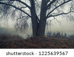 autumn forest mist trees... | Shutterstock . vector #1225639567