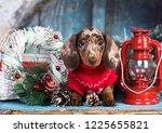 Puppy Dachshund  New Year's...