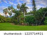 flamingos near the palm ... | Shutterstock . vector #1225714921