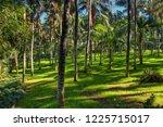 palms in the jungles  tenerife  ... | Shutterstock . vector #1225715017