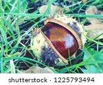 Horse Chestnut Still Life....