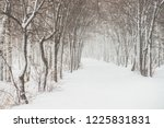 snowy tunnel among tree... | Shutterstock . vector #1225831831