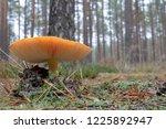 poisonous mushroom growing in... | Shutterstock . vector #1225892947
