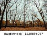 autumn landscape  late fall... | Shutterstock . vector #1225896067