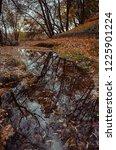 autumn forest landscape. autumn ... | Shutterstock . vector #1225901224