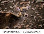 portrait of brown reddish... | Shutterstock . vector #1226078914