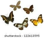 butterfly on white | Shutterstock . vector #122613595