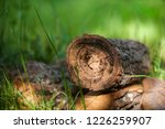 Wooden Logs In A Meadow With...