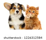 Stock photo puppy and kitten together 1226312584